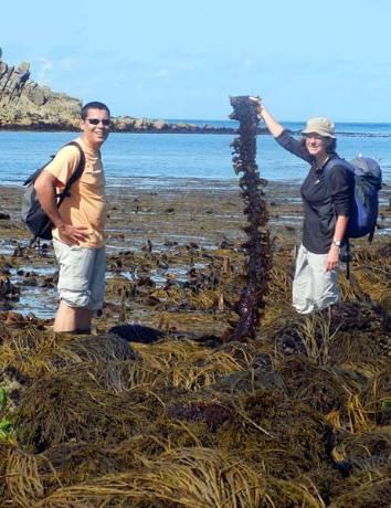 st-agnes-seaweed.jpg
