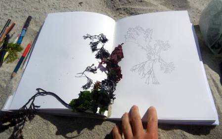 seaweed-field-drawing.jpg