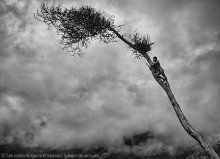 salgado-south-bending-tree.jpg
