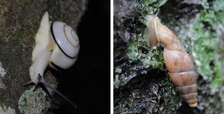 2  snails small.JPG