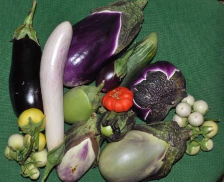 eggplants_Avignon.jpg