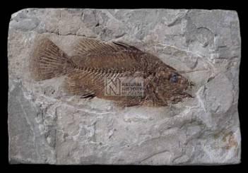 fish II.jpg