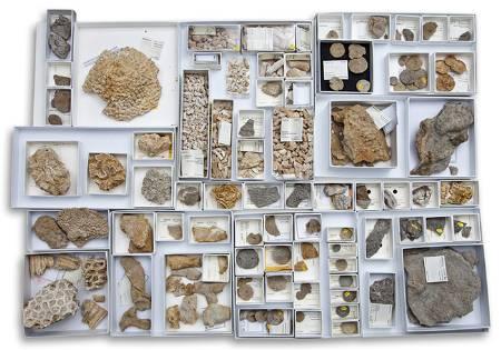 fossil-corals-700.jpg