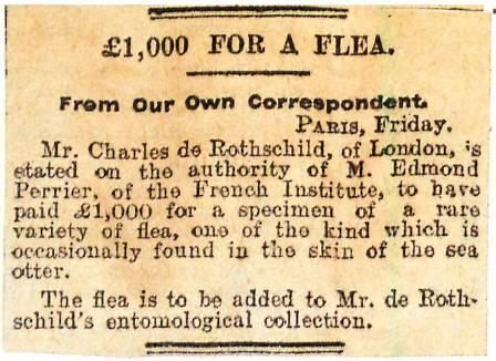 flea-claim-700.jpg