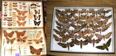 Donation & Purchased specimens.jpg