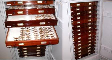 Cabinet with re-housed sphingidae drawers.jpg