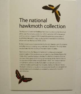 The National Hawkmoth Collection edited.jpg