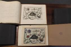 Archetypa-Studiaque-Patris-(1592)-mouse-.jpg