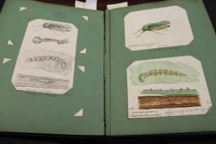 Original-and-published-drawings-together-in-the-artist's-own-scrapbook.jpg