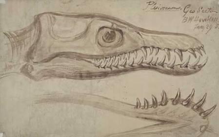 Plesiosaurus NHMPL 046677.jpg