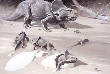 Protoceratops NHMPL 004093.jpg