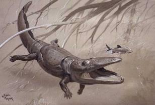 Paracyclotosaurus NHMPL 004091.jpg