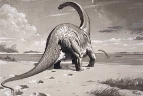 Cetiosaurus NHMPL 002917.jpg