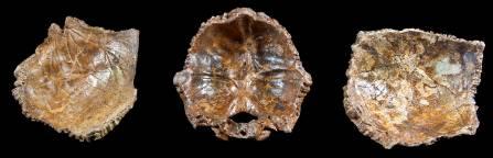 neanderthal-skull-pieces-1500.jpg