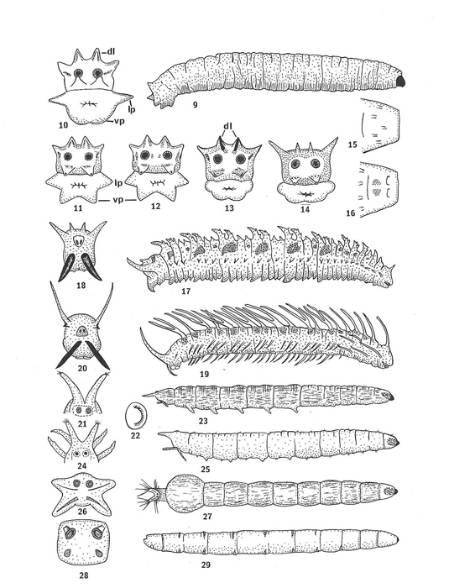 cranefly-larvae-resize-12feb14.jpg