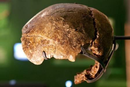 neanderthal-swanscombe-skull-1500.jpg