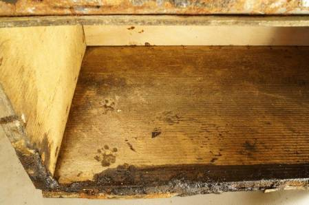 Box with paw print - Meg Absolon (Small).jpg