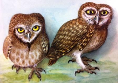owlets-1200.jpg