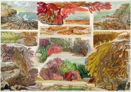 seaweeds-1500.jpg