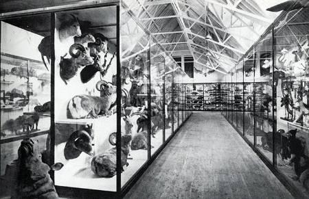 tring-gallery-1910_700.jpg