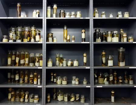 tring wet specimens 700.jpg