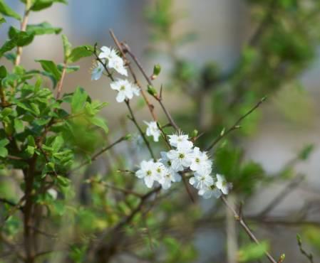 pic12-spring-bloosom-1000.jpg