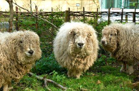 sheep-1500.jpg