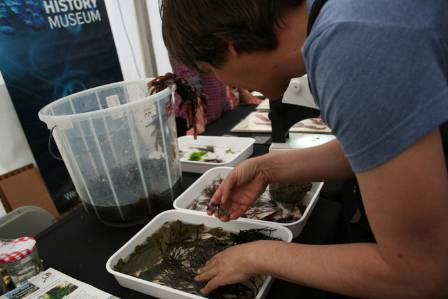 Mark spencer sorting seaweed.jpg