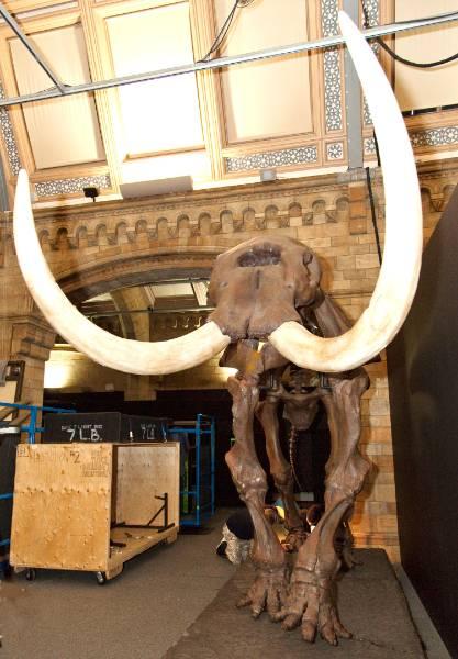 mastododon-tusks-1500.jpg