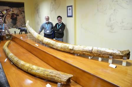 longest-tusks-adrian-lister-1500.jpg