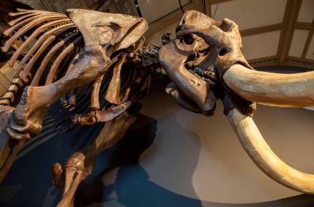 6-mastodon-1500.jpg