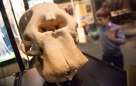 7-elephant-skull-1500.jpg