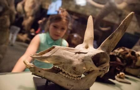 8-antelope-skull-girl-1500.jpg