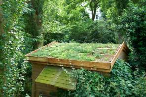 greenroof-june1500.jpg