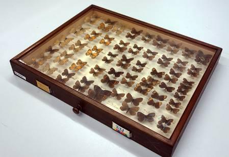 nabokov-butterflies-1.jpg