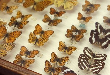 nabokov-butterflies-2.jpg