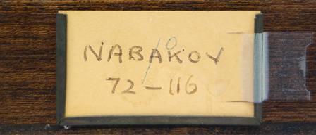 nabokov-drawer2v2.jpg