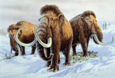 Mammoth heard 1.jpg