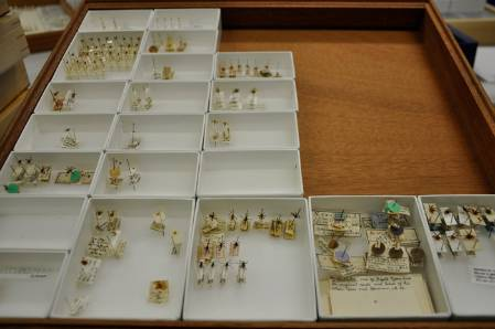 world+collection+nycteribiidae-700.jpg