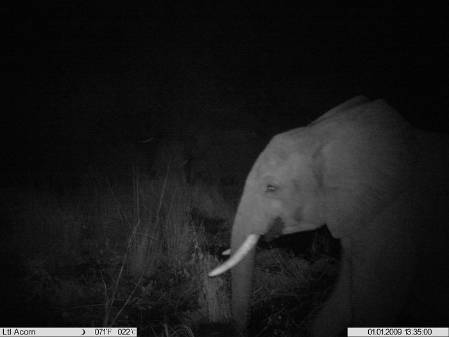 Elephant at night.jpg