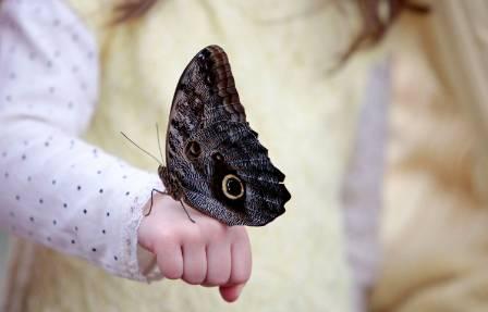 butterfly-hand-1500.jpg