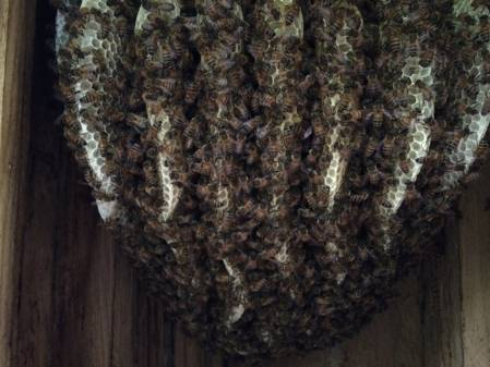 3 Bee tree-700px.JPG