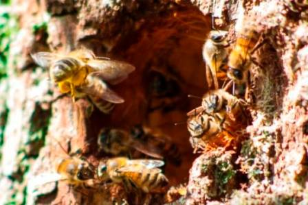 4.. bee tree)-700px.JPG