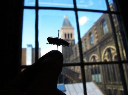 beetle nhm.jpg