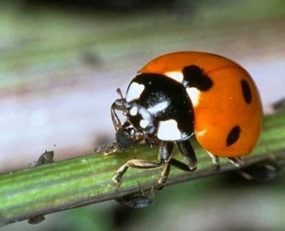 ladybird small.jpg