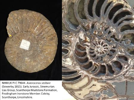 Frodingham_ammonite_blog.jpg
