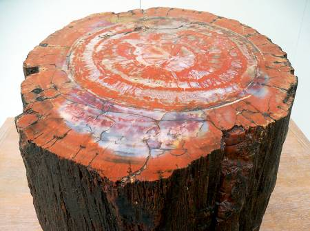 petrified-stump__700.jpg