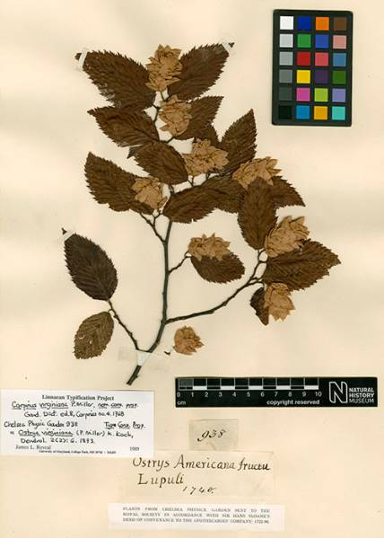 oldest-plant-specimen_500_700.jpg
