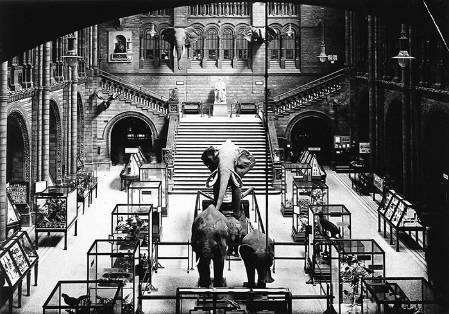 CH---elephant,-1924__700.jpg