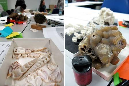 specimens_700.jpg